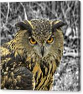 Great Horned Owl V6 Canvas Print