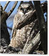 Great Horned Owlet Finishes Lunch Canvas Print