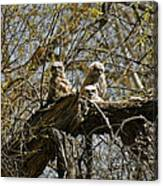 Great Horned Owlets Photo Canvas Print