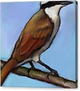 Great Kiskadee Bird Canvas Print