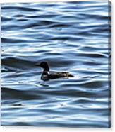 Great Northern Loon Canvas Print