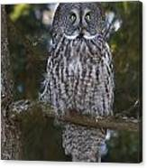 Great Owl Eyes Canvas Print