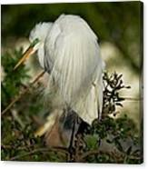 Great Egret Takes A Stance Canvas Print