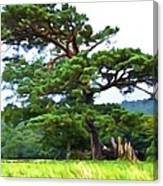 Great Pine Canvas Print