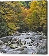Great Smoky Mountains Creek 4 Canvas Print