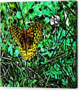 Great Spangled Fritillary Ins 49 Canvas Print