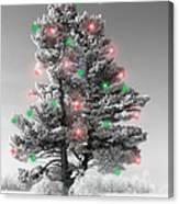 Great White Christmas Pine Canvas Print