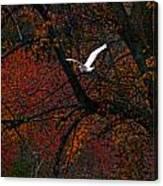 Great White Egret - Autumn Flight Canvas Print