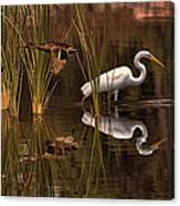Great White Egret And Mallard Flight Sunrise Reflection Canvas Print