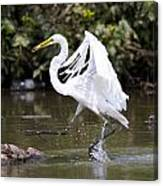 Great White Egret And Turtle Friends1 Canvas Print