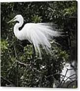 Great White Egret Building A Nest Vii Canvas Print