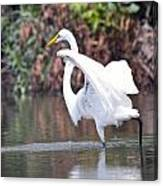 Great White Egret Fishing 1 Canvas Print