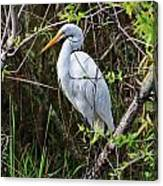 Great White Egret In The Wild Canvas Print