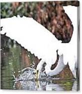 Great White Egret Splash 1 Canvas Print