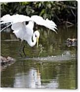 Great White Egret Wingspan And Turtles Canvas Print