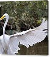 Great White Egret Wingspan1 Canvas Print
