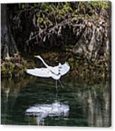 Great White Heron In Flight Canvas Print