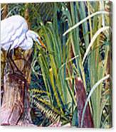 Great White Heron Sanctuary Canvas Print
