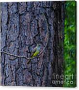 Greater Crested Flycatcher Canvas Print