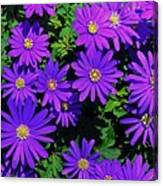Grecian Wildflowers 2 Canvas Print