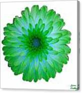Green And Blue Dahlia Canvas Print