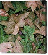 Green And Brown Leaves Canvas Print