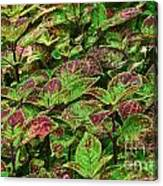 Green And Purple In Nature Canvas Print
