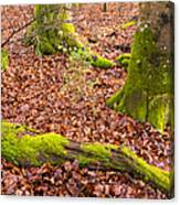 Green And Red Nature In The Forest Canvas Print