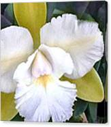 Green And White Cattleya Orchid Canvas Print