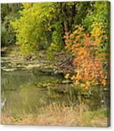 Green Ash In Autumn Foliage Canvas Print
