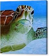 Green Back Turtle Canvas Print
