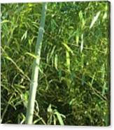 Green Bamboo Canvas Print