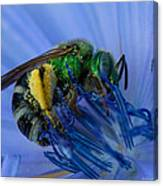 Green Bee Blue Moment Canvas Print