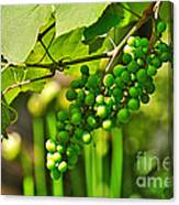 Green Berries Canvas Print