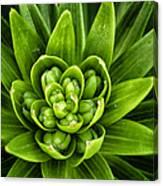 Green Buds Canvas Print