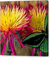 Green Butterfly On Fire Mums Canvas Print