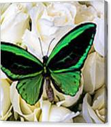 Green Butterfly On White Roses Canvas Print