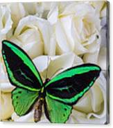 Green Butterfly With White Roses Canvas Print