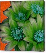 Green Cactus Flowers Canvas Print