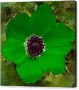 Green Calanit Magen Canvas Print