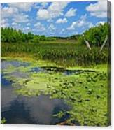 Green Cay Nature Preserve Beauty Canvas Print