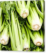 Green Celery On Display Canvas Print