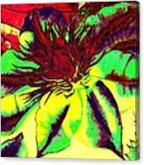 Green Clematis Flower Canvas Print