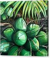Green Coconuts  3  Sold Canvas Print