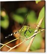 Green Dragonfly Canvas Print