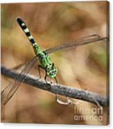Green Dragonfly Square Canvas Print