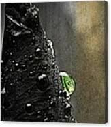 Green Droplet  Canvas Print