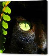 Green Eyed Black Cat Canvas Print