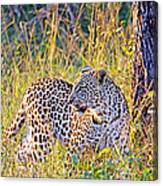 Green Eyed Leopard Canvas Print