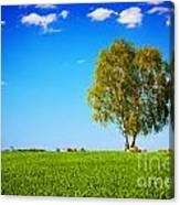 Green Field Landscape With A Single Tree Canvas Print